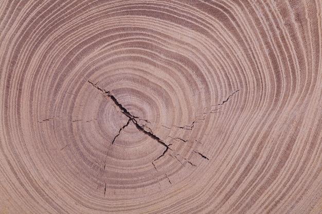 木製の木の幹の背景のテクスチャ。