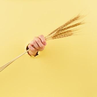 黄色の小穂を持つ女性の手