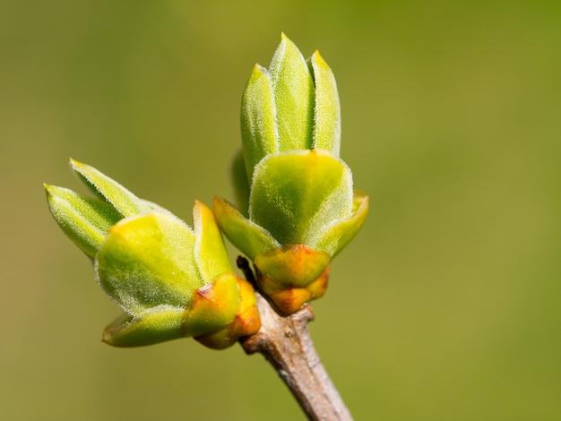 最初の花開く枝
