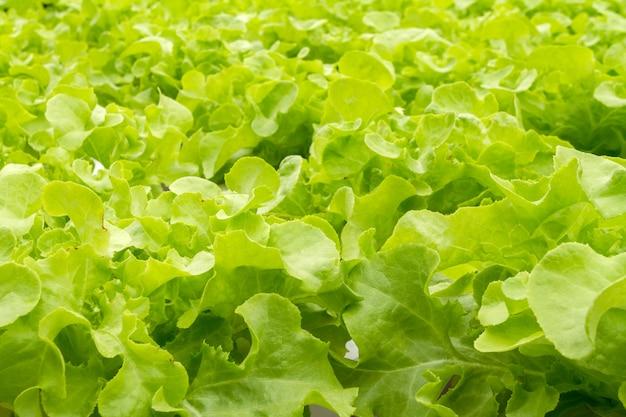 水中の無機栄養溶液を用いた生育植物の水耕栽培法