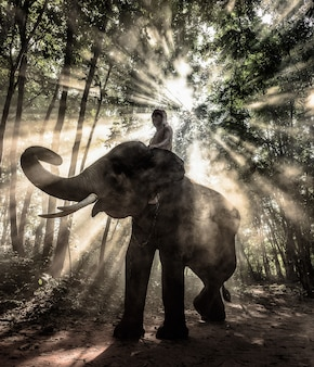 タイの光線でトレッキングシルエット象。