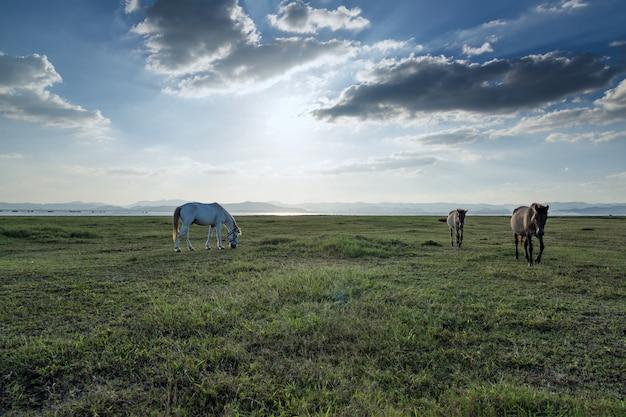 フィールドで牧草地