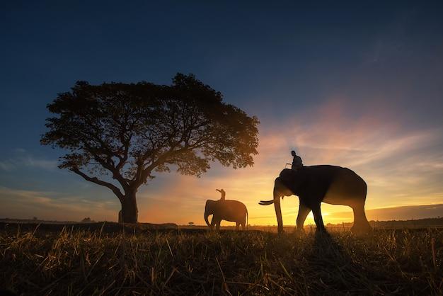 タイ田舎;夕日の背景にシルエットの象
