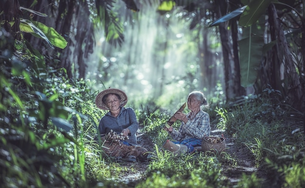 熱帯雨林で働くアジアの老人、タイ