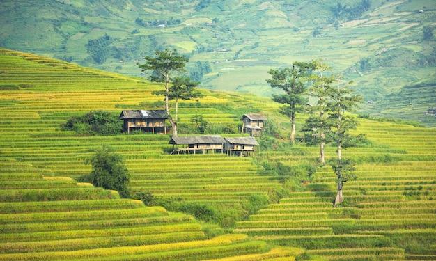 ベトナム。ベトナム北西部で田んぼが移植の準備をする