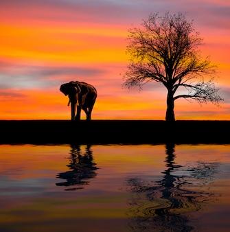 野生の象のシルエット