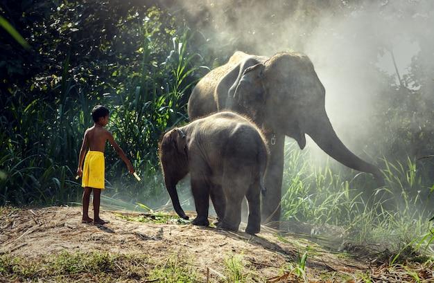 子供を持つ象