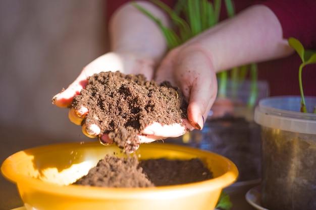 有機農作物を育てます。玉ねぎを植えます。