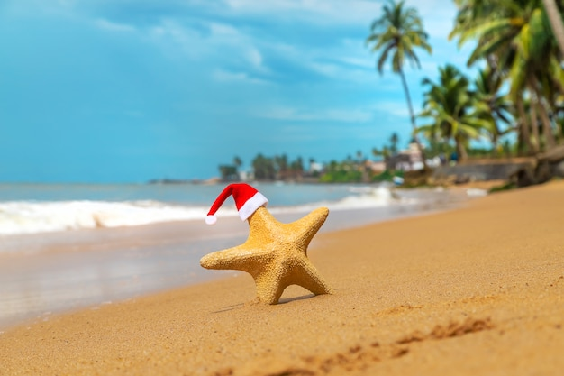Морская звезда дед мороз на пляже