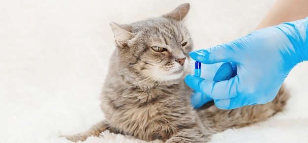 Лечение кошачьих таблеток. ветеринария.