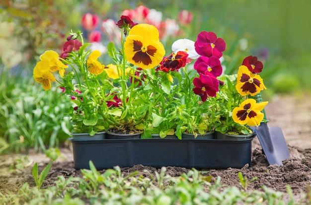 花畑を植える、春夏。セレクティブフォーカス。