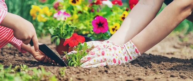 Ребенок и мать сажают цветы в саду. выборочный фокус.