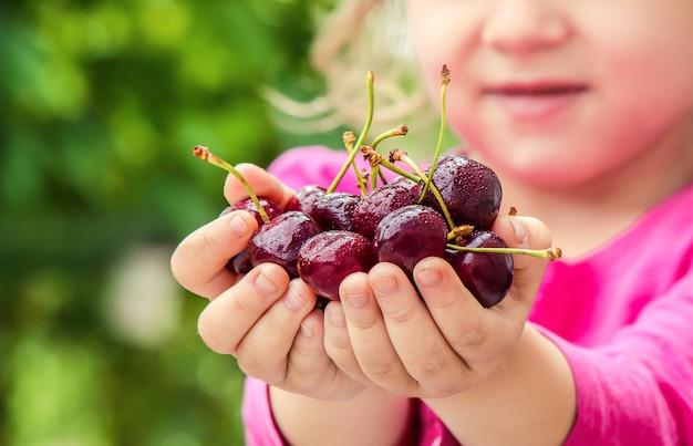 子供は庭でさくらんぼを摘んでいます。セレクティブフォーカス