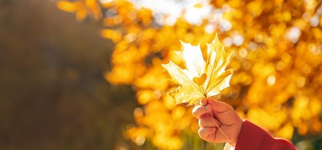 美しい秋の葉。黄金の秋。選択フォーカス。