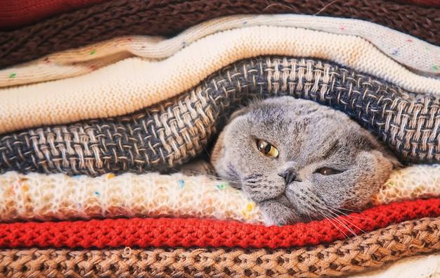 Кошка в стопке теплой одежды. выборочный фокус.