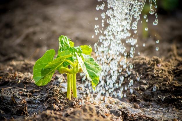 新しい人生を大切にします。若い植物に水をまきます。子供の手セレクティブフォーカス