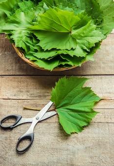 ドルマを調理するためのブドウの葉。セレクティブフォーカス