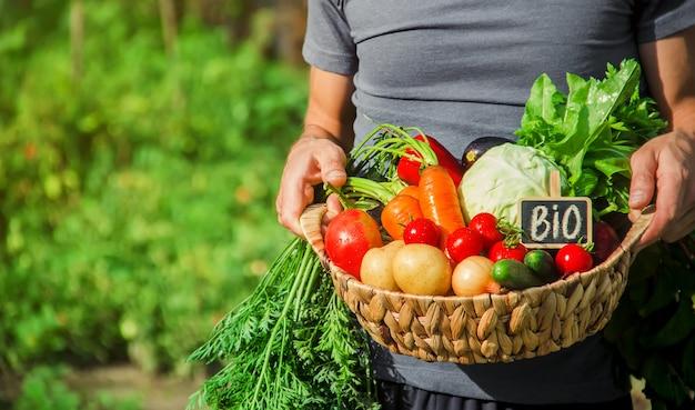 男性の手の中に自家製野菜。収穫。セレクティブフォーカス