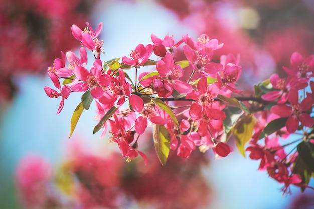 春の花盛りの木。咲く庭。セレクティブフォーカス自然