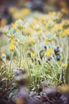 花のたくさんの写真。コラージュ。セレクティブフォーカス