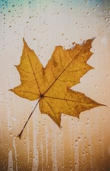 Осенние листья. выборочный фокус. флора и фауна.