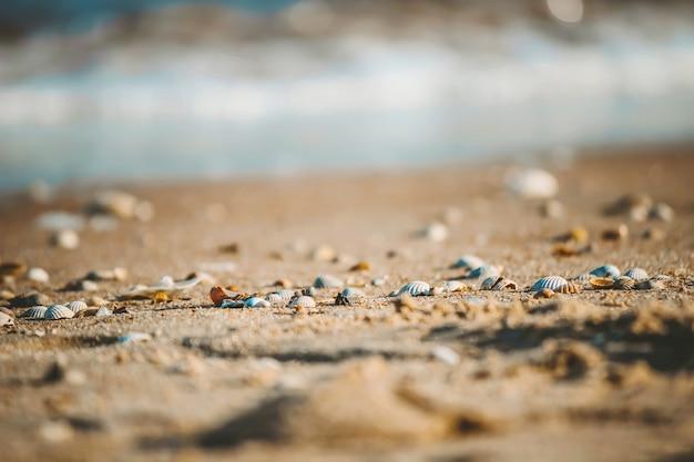海の上の貝殻とヒトデ。夏の写真