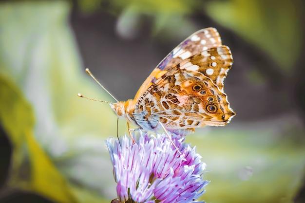 花を蝶します。セレクティブフォーカス自然。