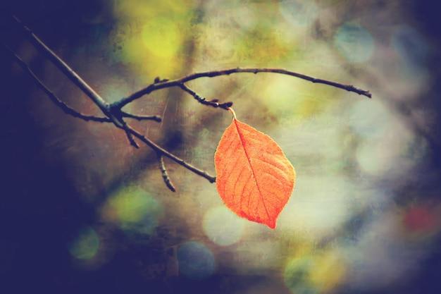 紅葉と本。セレクティブフォーカス