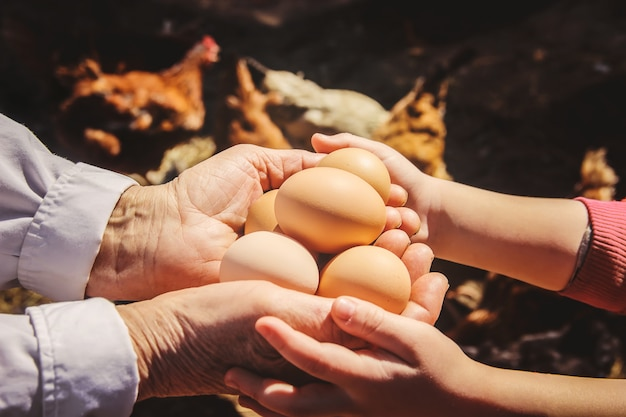 手で鶏の国内卵。セレクティブフォーカス