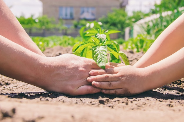Ребенок сажает растение в саду. выборочный фокус.