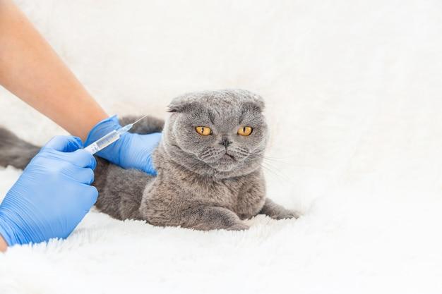 猫の予防接種獣医学セレクティブフォーカス。