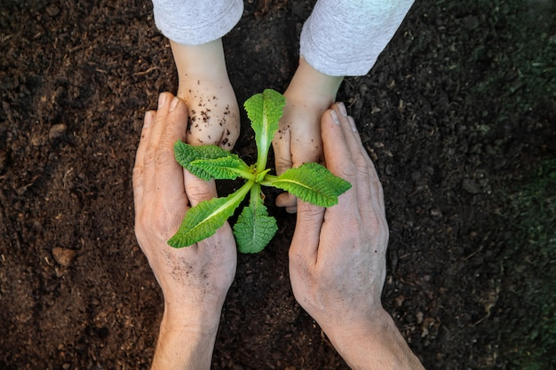 園芸、庭に植物を植えます。庭園。セレクティブフォーカス