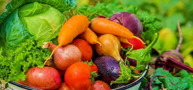 さまざまなバイオ野菜。写真。食物の性質