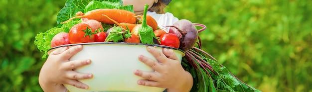 Ребенок и овощи на ферме. фото.