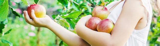 りんごを持つ子供。セレクティブフォーカス庭園。