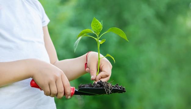 Детские растения и полив растений в саду