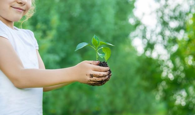 子植物と庭の水やりの植物。セレクティブフォーカス
