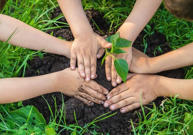 子供たちは庭に植物を植えます。セレクティブフォーカス