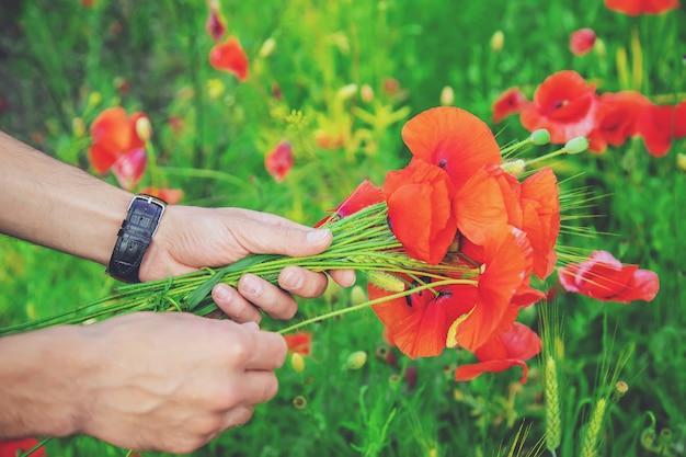 男は野の花の花束を収集します。ポピーの選択と集中