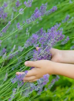 ラベンダーの開花畑の子供。セレクティブフォーカス