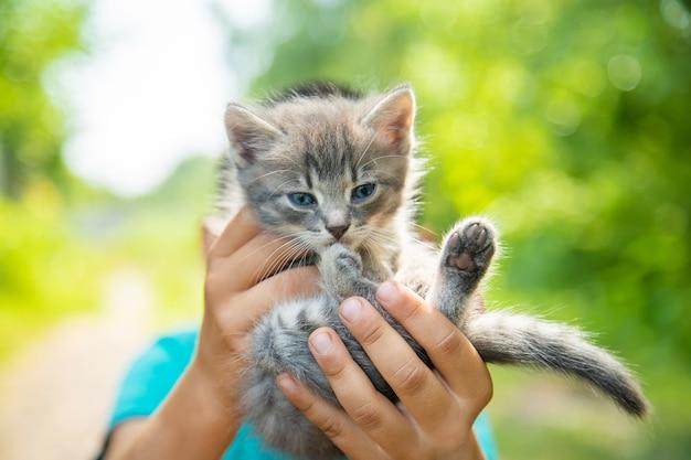 子供たちの手の中の小さな子猫