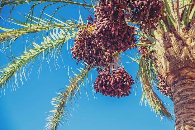 Финиковые пальмы на фоне неба