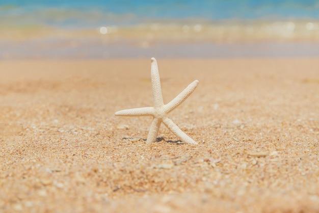 砂のビーチでヒトデ。セレクティブフォーカス。