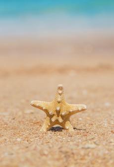 砂のビーチでヒトデ