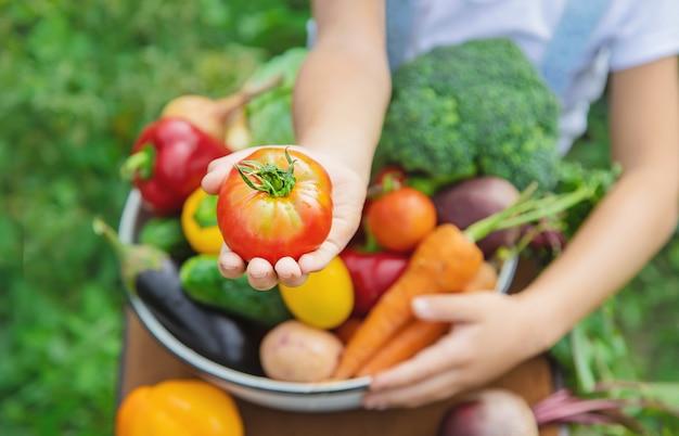 彼の手で野菜と庭の子。