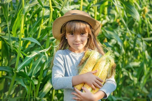子供の手の中の畑のトウモロコシ