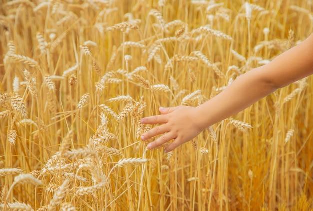 Ребенок в пшеничном поле.