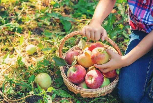 子供は庭の庭でりんごを摘みます。