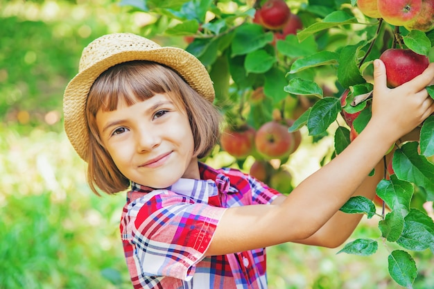 子供が庭の庭でりんごを選ぶ