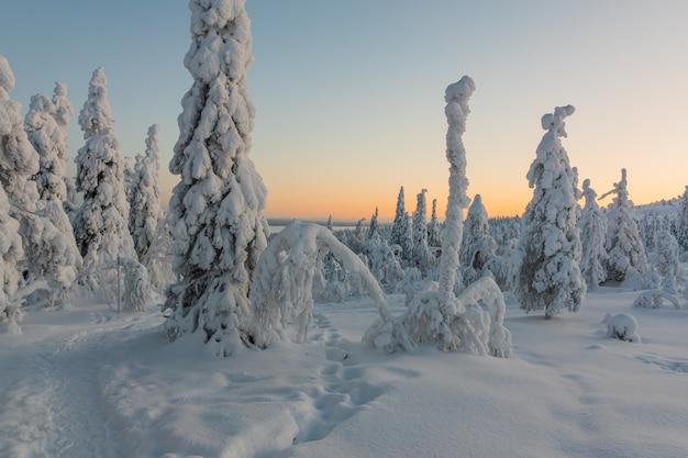 雪と冬の風景は冬の森の木に覆われています。